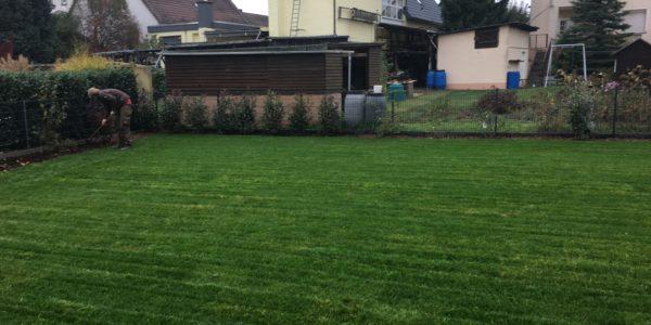 Gartengestaltung Frankfurt rasenpflege m quirin gartengestaltung frankfurt